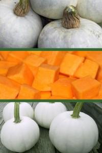 Тыква овощная Бундева белая
