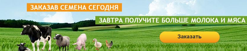 Польза кормовой свеклы для животных