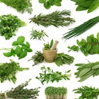 Другие зеленные и пряно-ароматические культуры